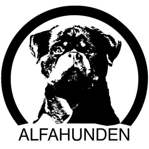 hundträning hundkurser Skåne