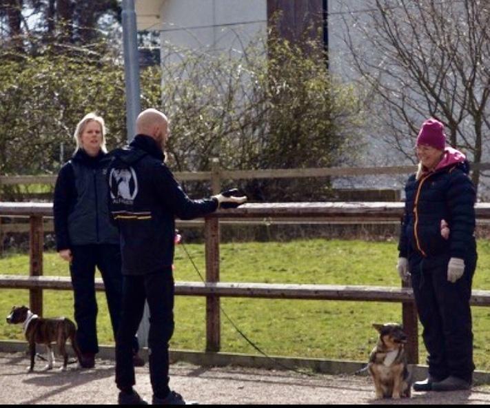 grundkurs hundkurser Skåne